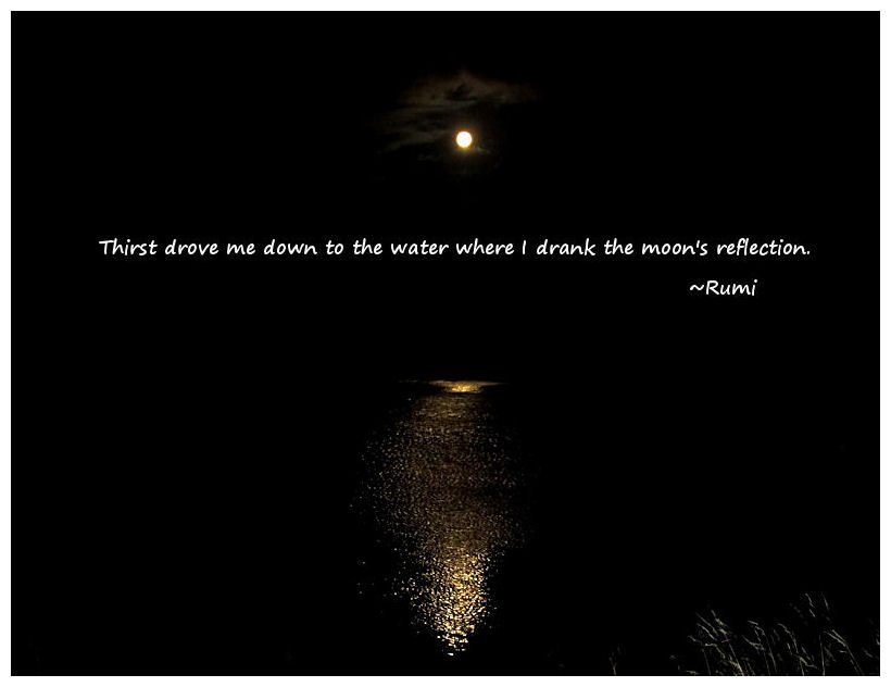 Wisdom Of Rumi Quotesmoonipulations