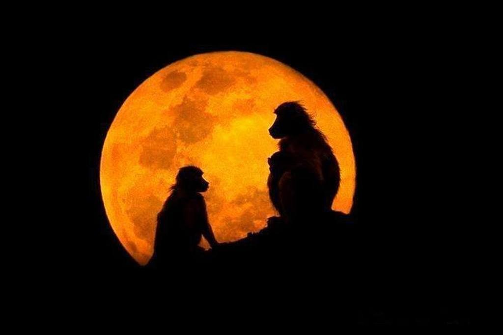 monkeys moon
