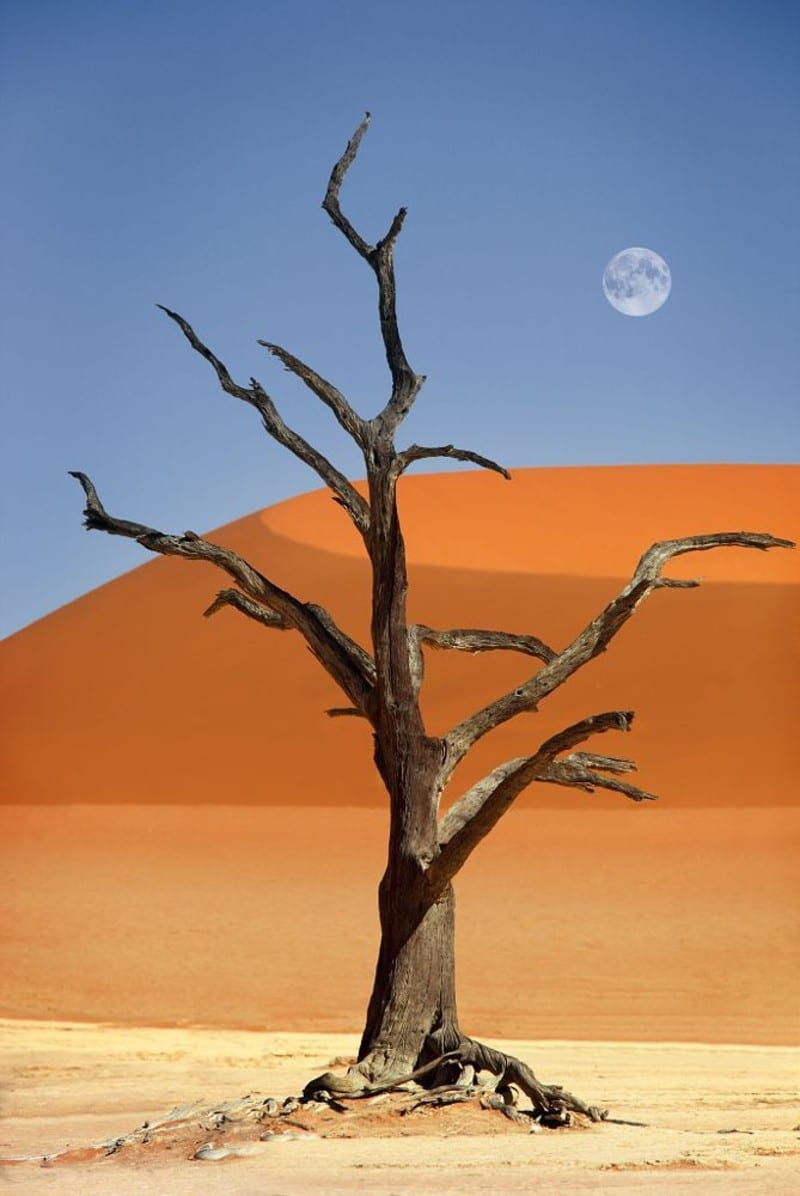 Namibian desert moon by Dietmar Temps
